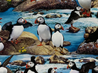 Puffin-on-the-rock-crop